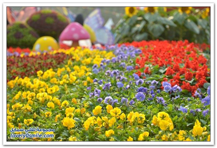 مهرجان الزهور هونج كونج 2013 Flower-Festival-in-H