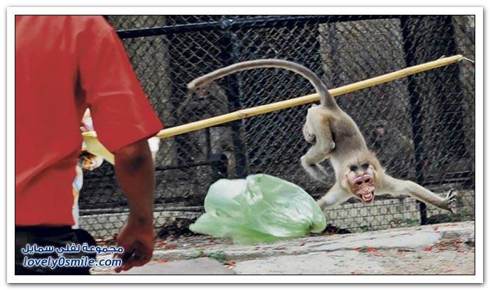 قرد يهاجم صبي في حديقة حيوان في الهند