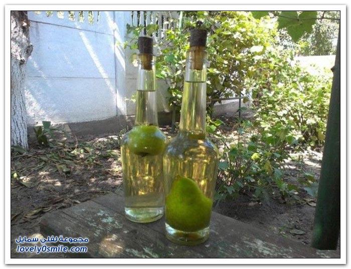 الكمثرى في زجاجات