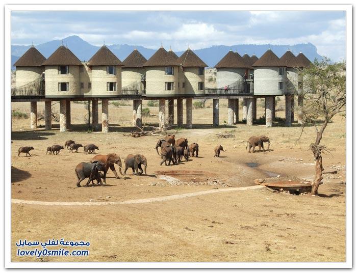 فندق ساروفا سالت في كينيا الفيلة تحت النوافذ