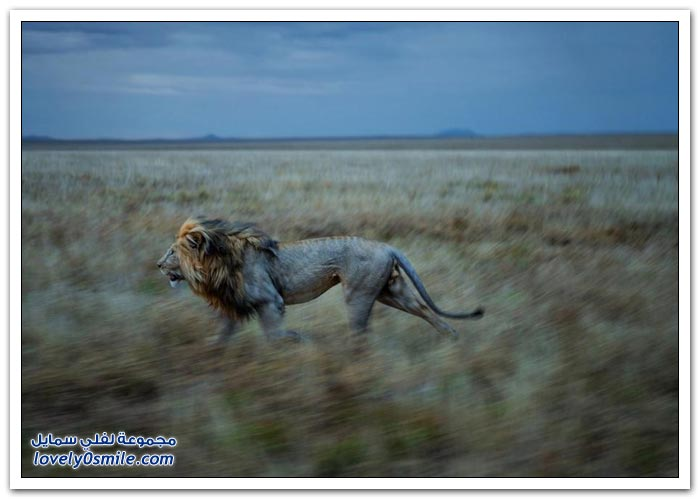 أفضل الصور من ناشيونال جيوغرافيك في يوليو 2013