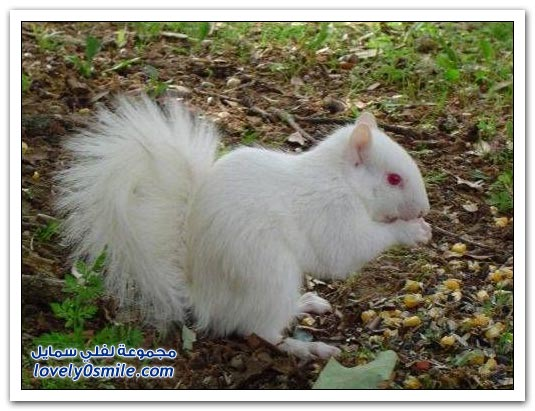 الحيوانات البيضاء