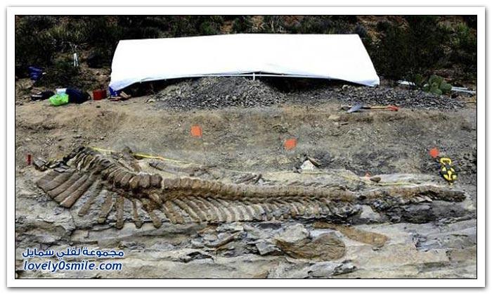 اكتشاف بقايا ديناصور في المكسيك