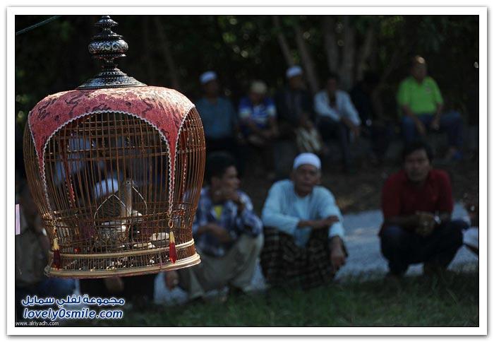 مسابقة غناء الطيور