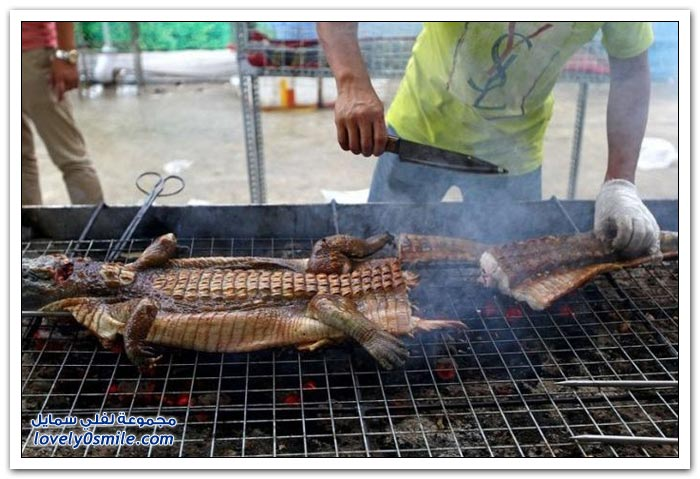 في الصين حتى التماسيح يأكلونها مشوية