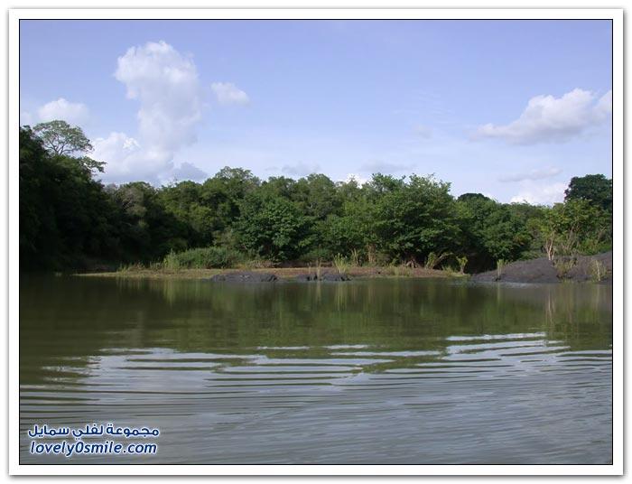 صور من أدغال أفريقيا