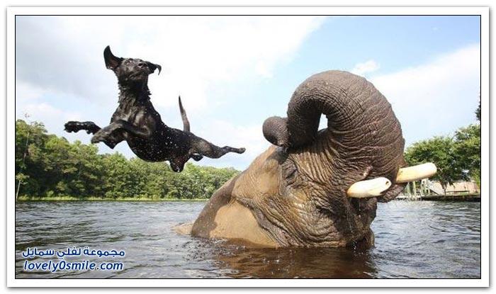صداقة عجيبة بين كلب وفيل