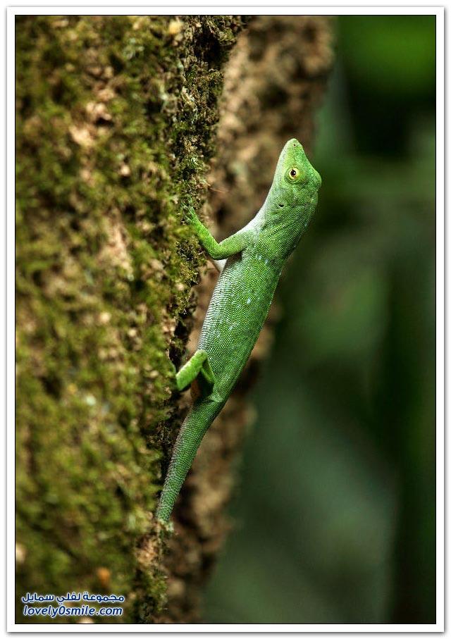 الحياة البرية في كوستاريكا