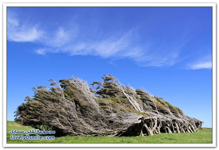 شاهد قوة الرياح ماذا قد تفعل بالأشجار في نيوزيلندا