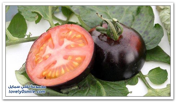 الطماطم الأسود