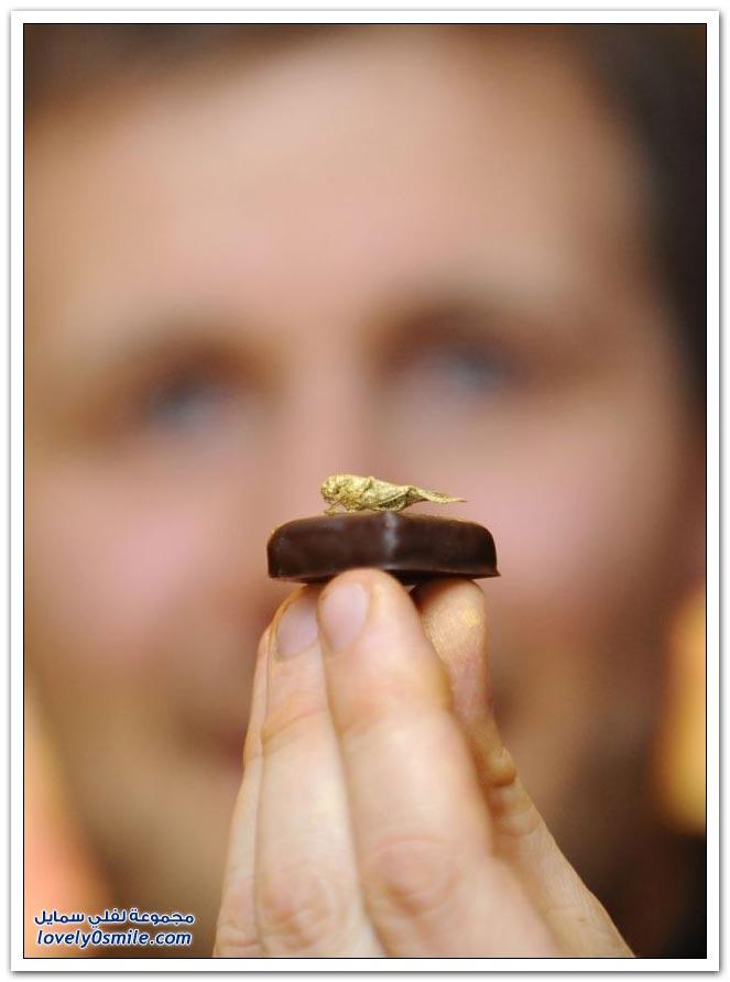 أكل الشوكولاته مع الجراد