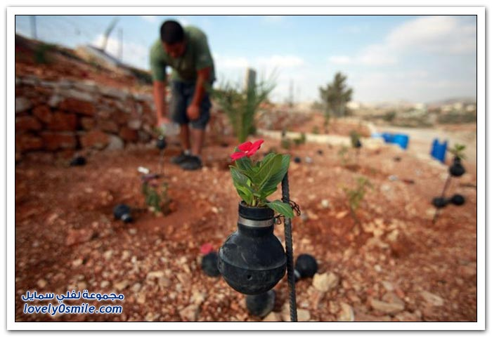 تحويل قنابل الغاز الفارغة إلى مزهريات في فلسطين