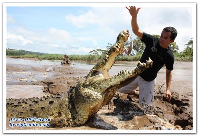صديق التماسيح في كوستاريكا