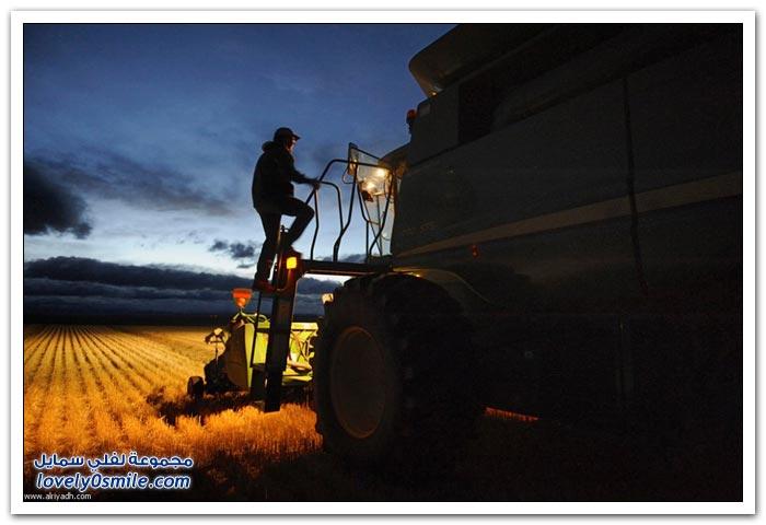 وقت الحصاد