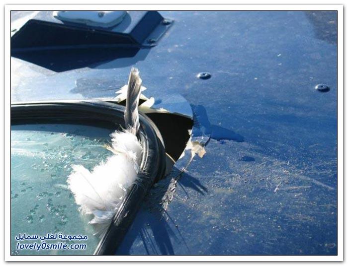 طائرة مروحية تصطدم بسرب من الطيور