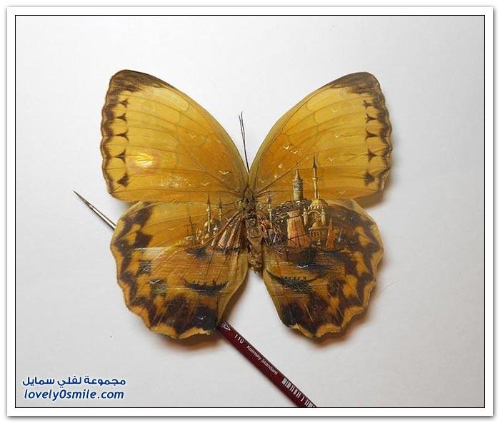 فنان تركي يرسم لوحات على أجنحة الفراشات والأجسام الصغيرة