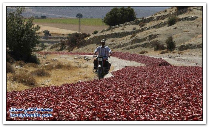 شوارع تركية بنكهة الفلفل الأحمر الحار