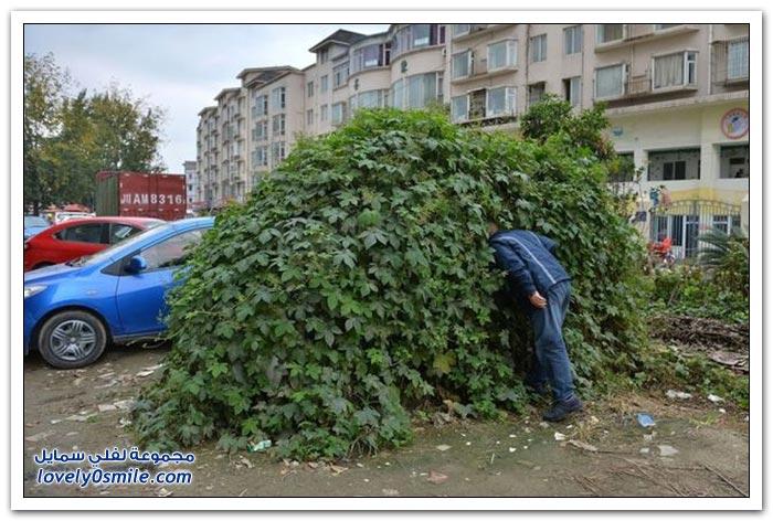 سيارة مهجورة في الصين ينتهي بها الحال إلى شكل شجرة