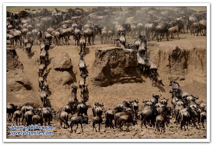 رحلات سفاري لأفريقية