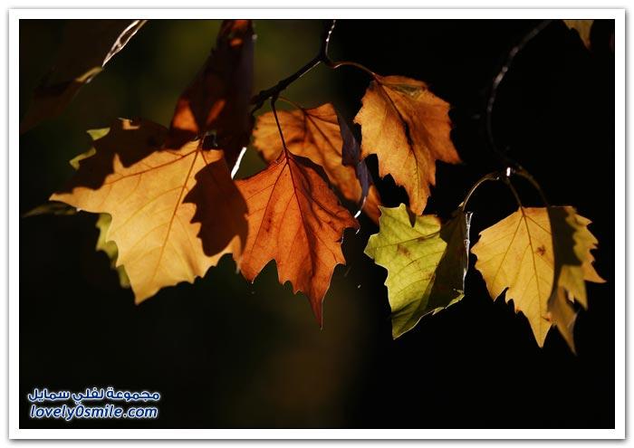 صور الخريف حول العالم لعام 2013م