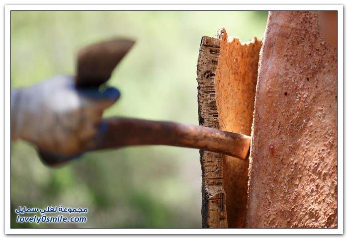 استخدام لحاء شجر البلوط كأغطية للقوارير