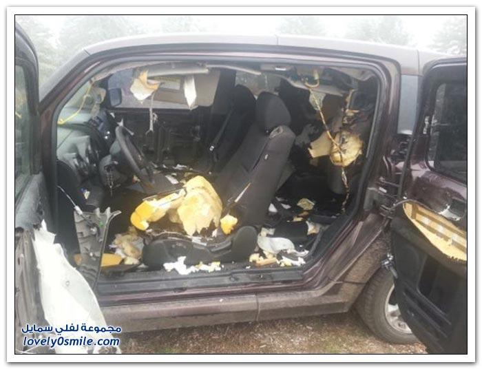 شاهد ماذا فعلت الدِبَبَة بالسيارة