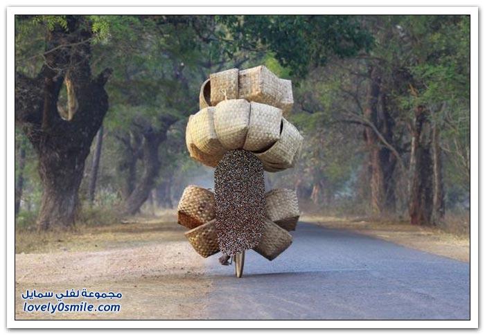 مهما كانت الحمولة ثقيلة يمكن أن تُنقل بأي شكل