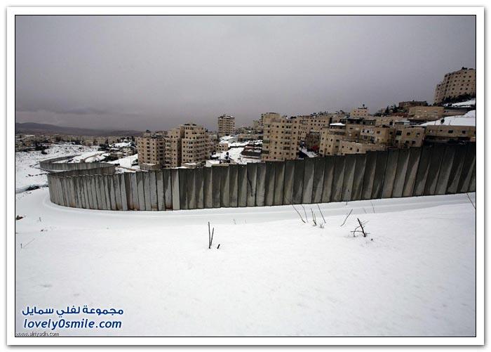 اليكسا وفلسطين