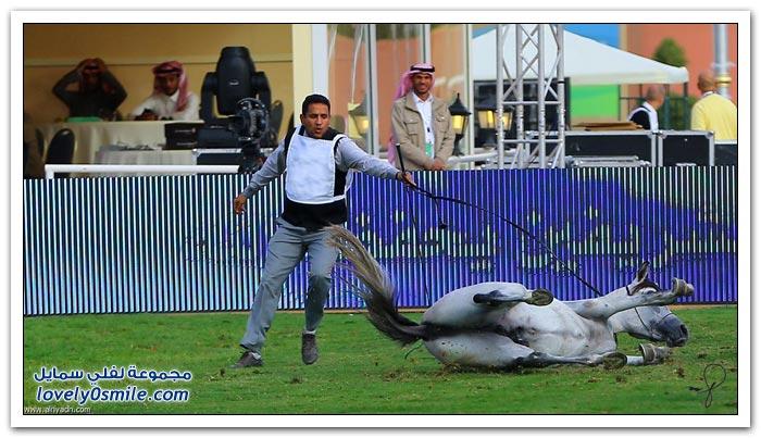 بطولة جمال الخيل العربي