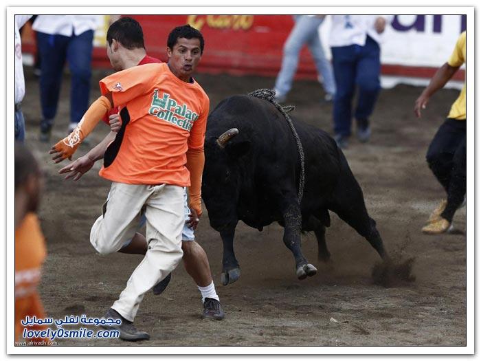 مهرجان مصارعة الثيران