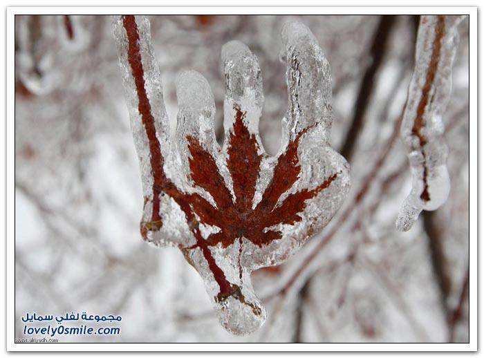 تجمد الأمطار بكندا