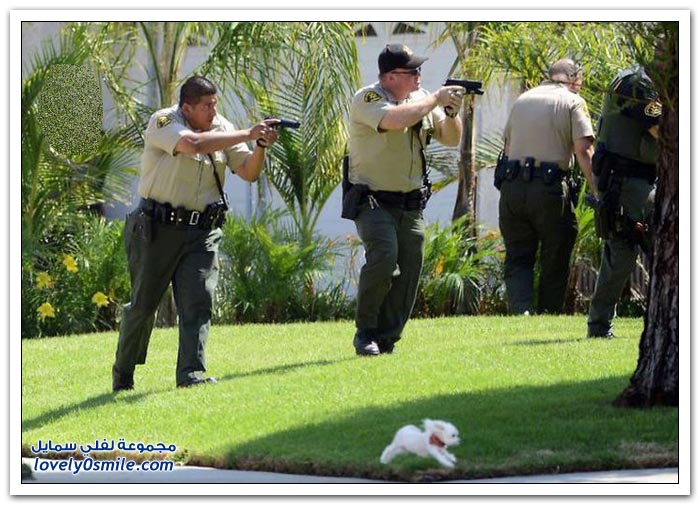 الشرطة أثناء العمل