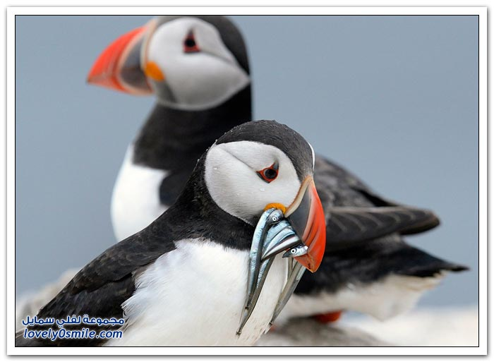 جولة مع طيور وحيوانات جزر فارن