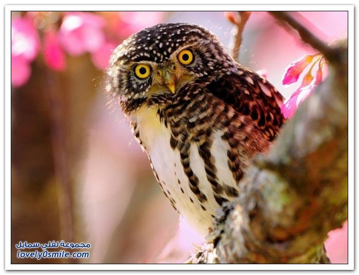 صور لأنواع مختلفة من الطيور