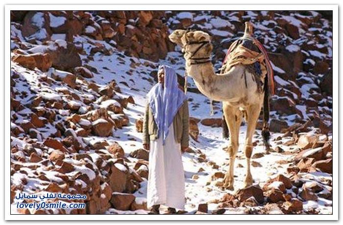 صور الثلوج في مصر والشرق الأوسط
