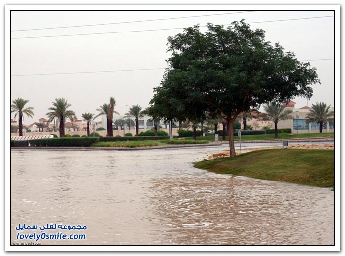 جولة في منتزهات الرياض بعد الأجواء الماطرة