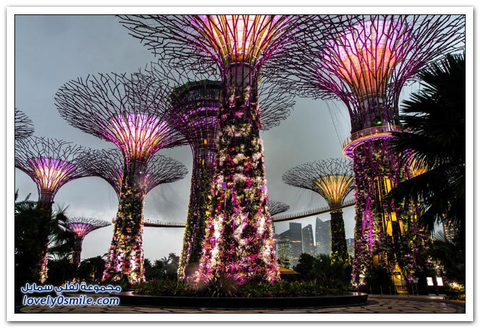 الأشجار الفولاذية تزين حدائق سنغافورة