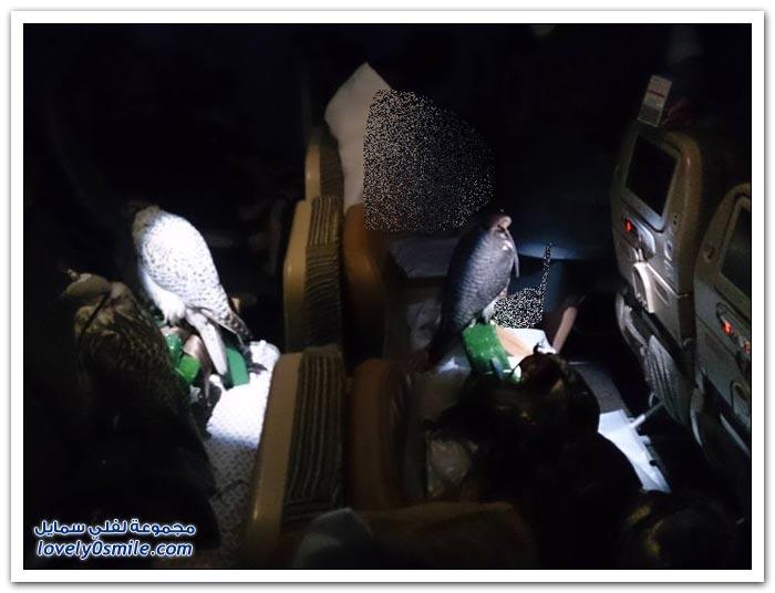 صقور على طائرة ركاب من الدار البيضاء إلى أبو ظبي