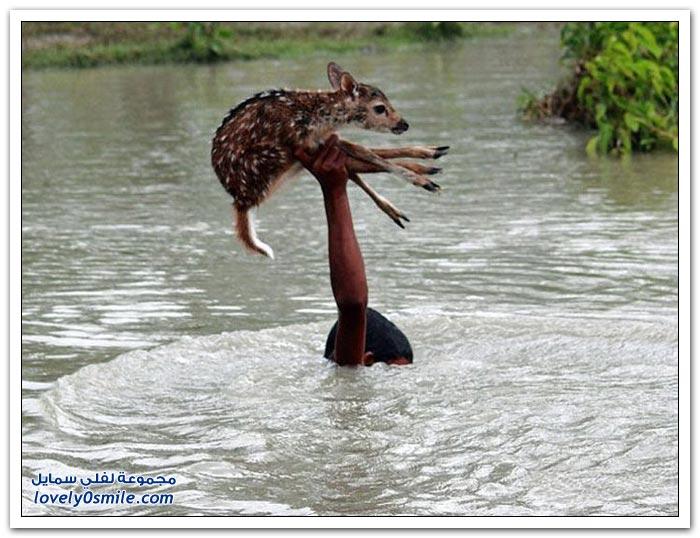صبي ينقذ ظبي من الغرق في بنجلادش