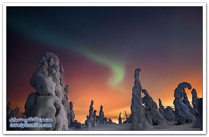 أشجار القطب الشمالي المتجمدة