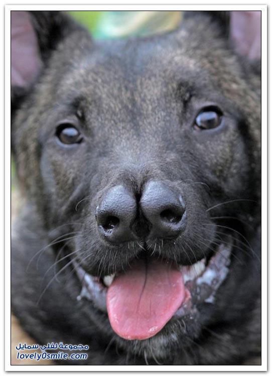 لا أحد يرغب في امتلاكه .. كلب له أنفين