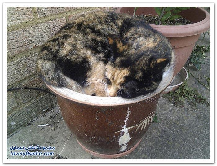 قطط تنام في أماكن غريبة