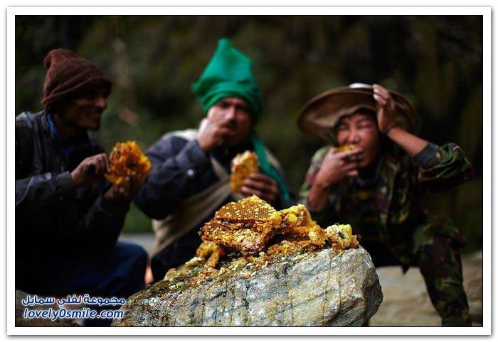 جمع العسل من سفوح جبال الهيمالايا