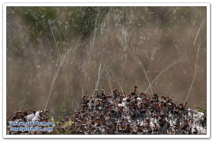 كيف يدافع النمل عن نفسه من الحشرات والطيور