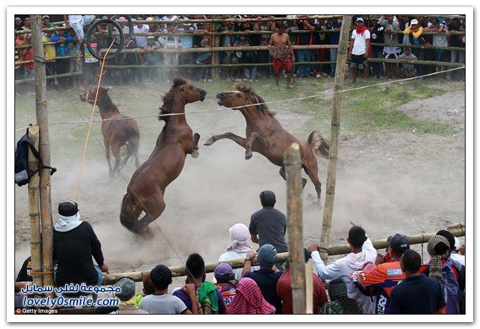 مسابقة قتال الخيول في الفلبين