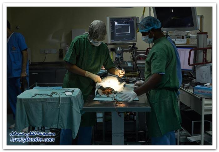 مستشفى الصقور في أبو ظبي