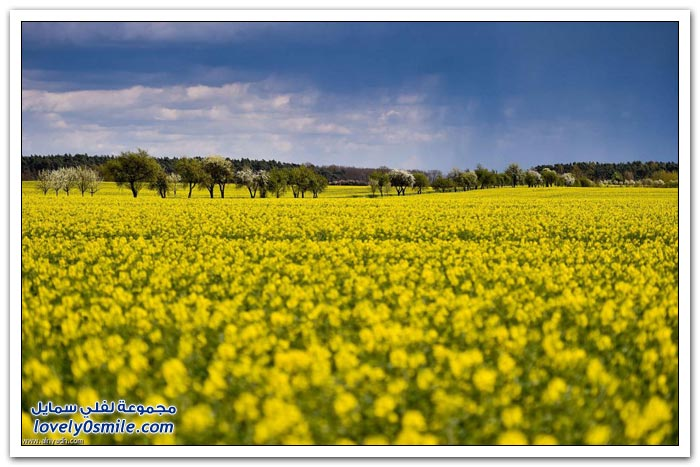 زهور الربيع في هولندا