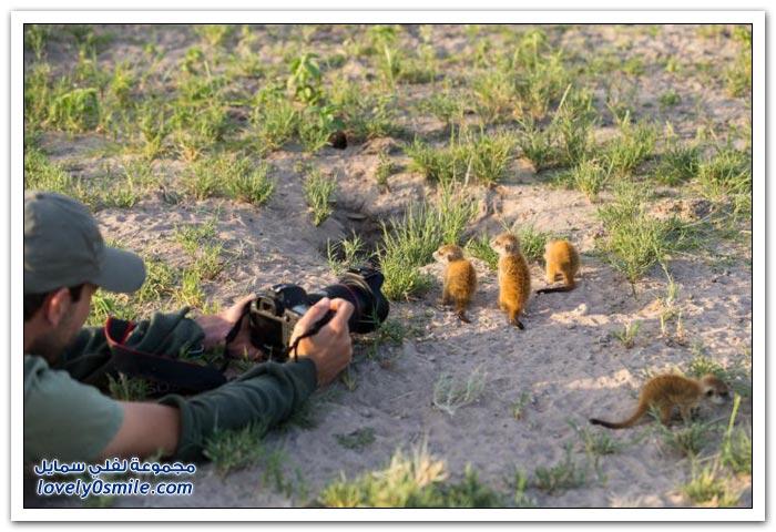 حيوان السرقاط يلعب مع مصور
