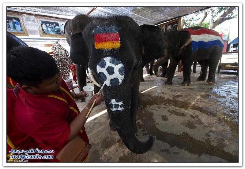 مباراة الفيلة