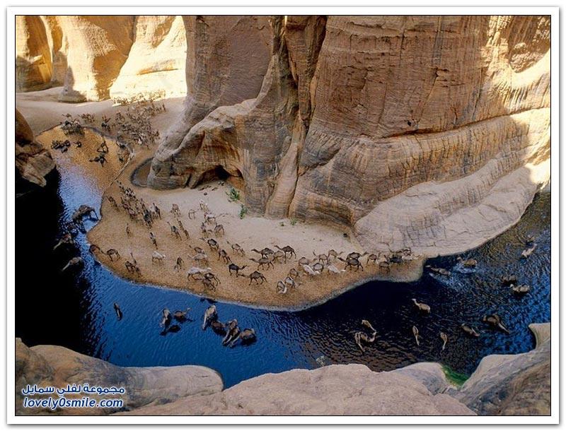 واحة جيلتا في صحراء تشاد